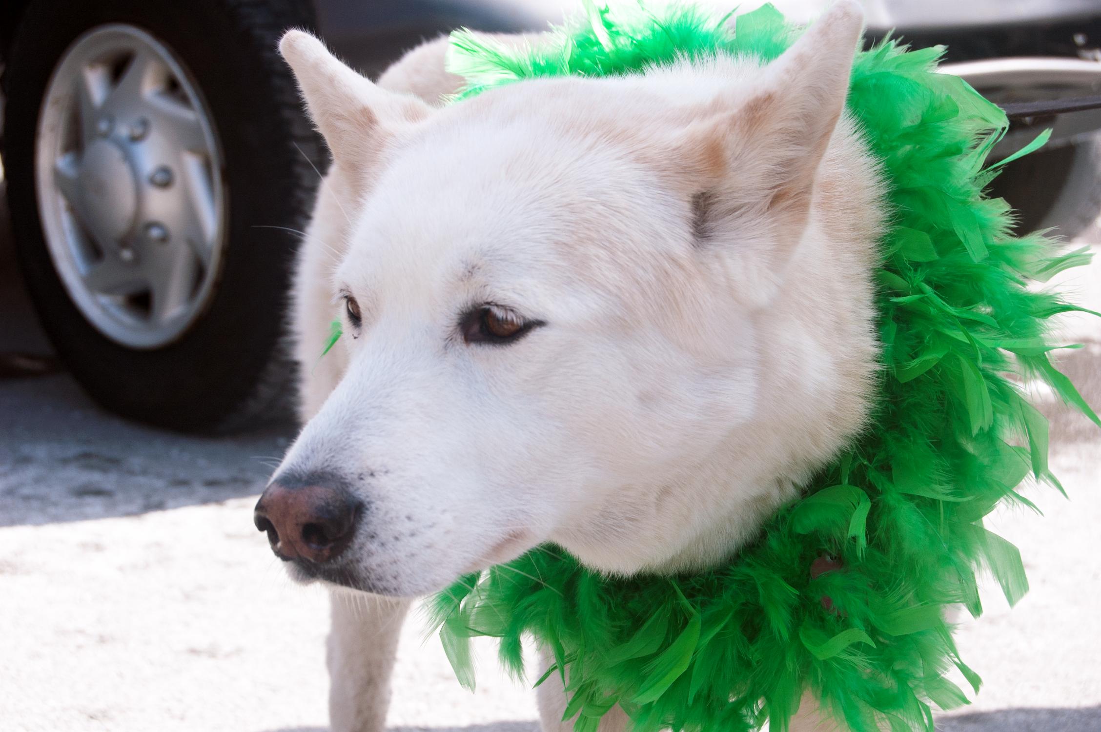 Street style animal au défilé de la Saint-Patrick de Montréal!