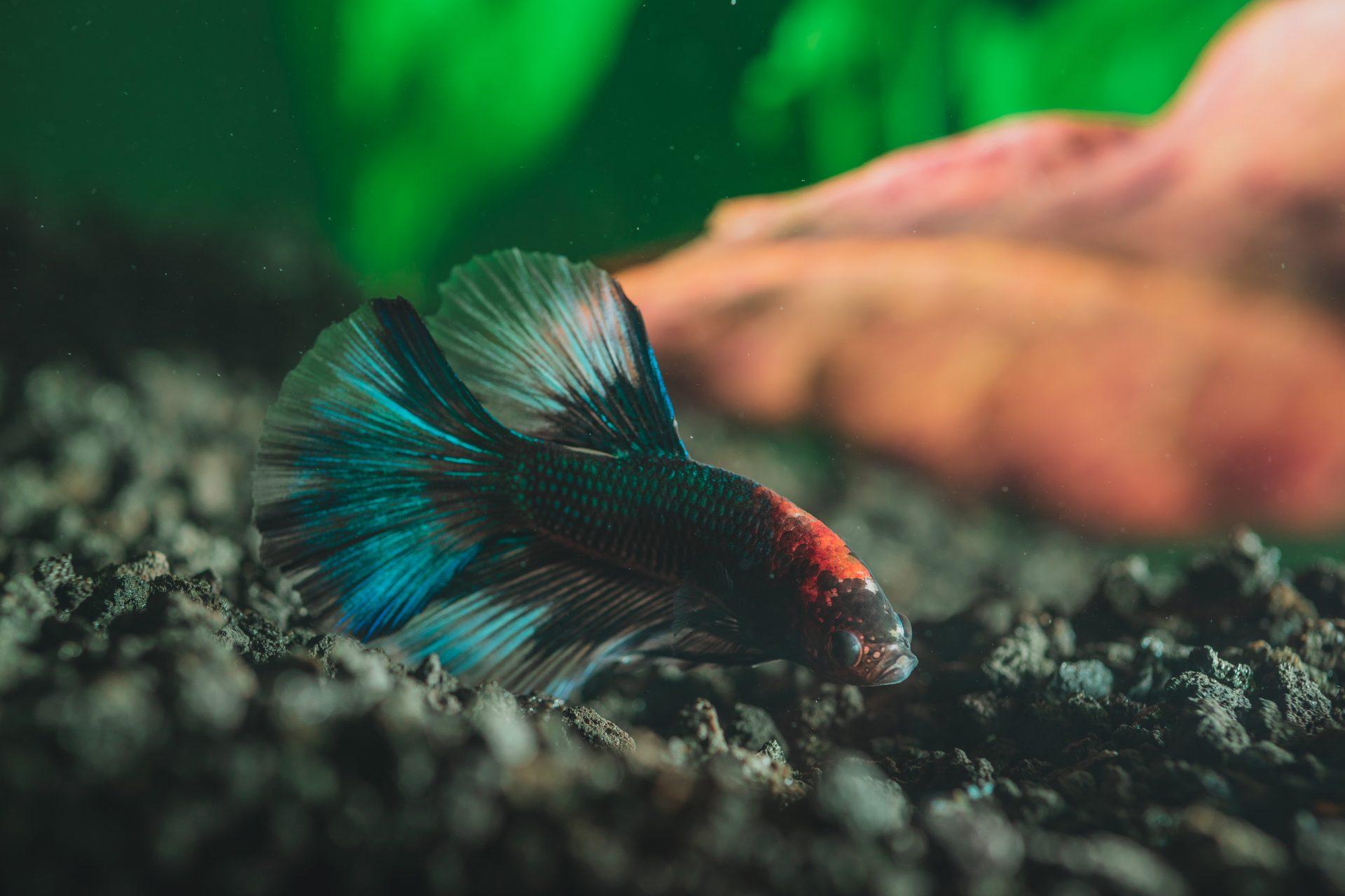 prendre soin poissons petit aquarium